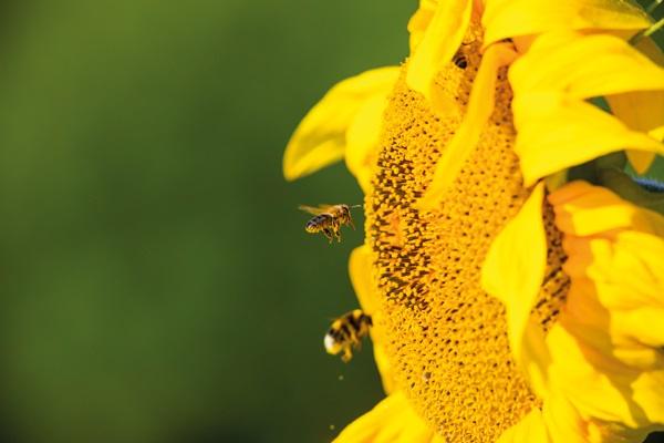 Antrag zur Förderung der biologischen Vielfalt durch Überlassung von kommunalen Grundstücken für die Aufstellung von Wildbienen-Hotels und Honigbienen-Beuten